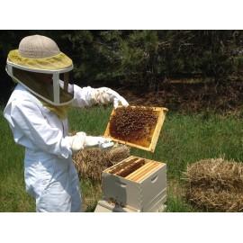 Exkurze na včelí farmě